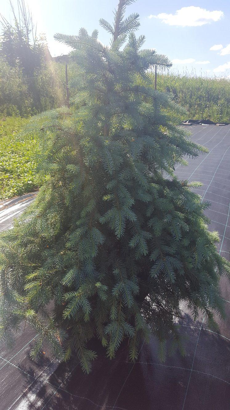 Sodinukas.lt - Vilniaus Regiono Medelynas